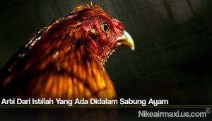 Arti Dari Istilah Yang Ada Didalam Sabung Ayam