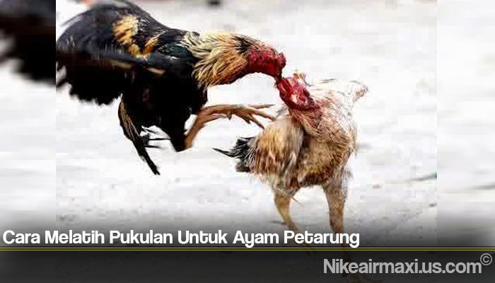Cara Melatih Pukulan Untuk Ayam Petarung