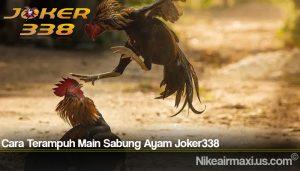 Cara Terampuh Main Sabung Ayam Joker338